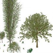 SketchUp plugin: Tree Maker