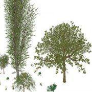 SketchUp plugin: Tree Maker